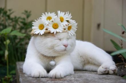壁纸 动物 猫 猫咪 小猫 桌面 440_292