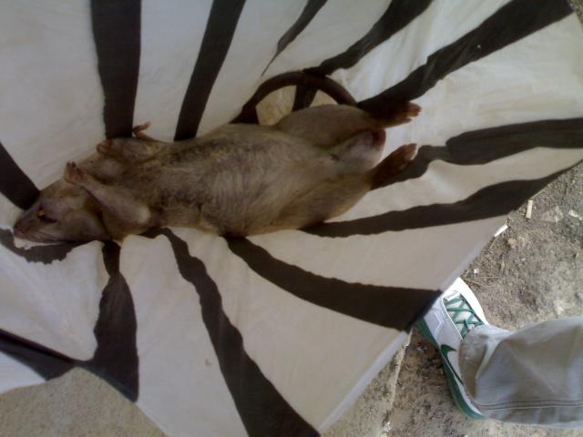 卢本巴希9吃电影买老鼠开别墅桑塔纳图片