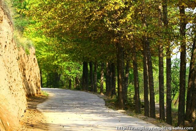 秋天--让我们走进青海山林看风景