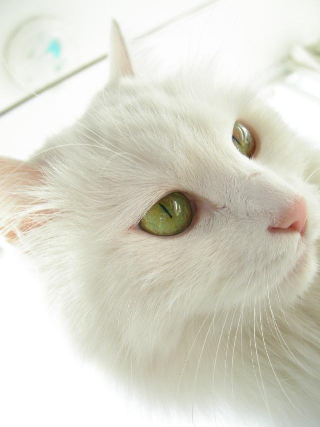 粉嫩的绿眼睛蛋蛋咪~~七组可爱生活照 n多片片 大家快