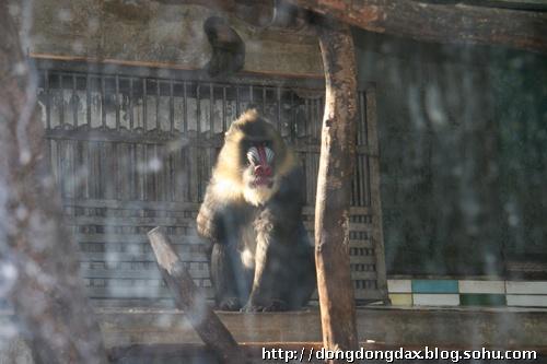 冬天的动物园1_卢冬霞-美联爱康动物医院院长