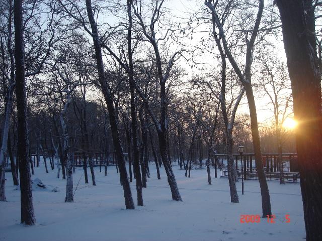 注释:城建北尚边的槐树林,雪后晨练时听到雀鸟啾啾,有感而得.