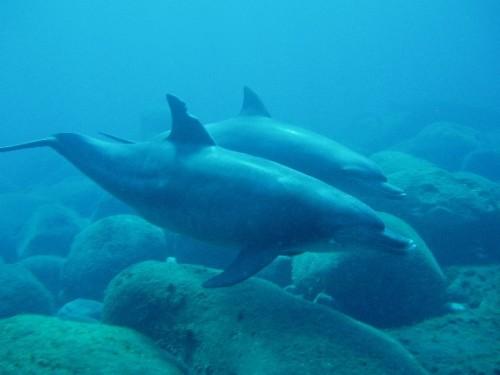 会发生什么是海豚打破海绵从海底和穿着它在其讲台