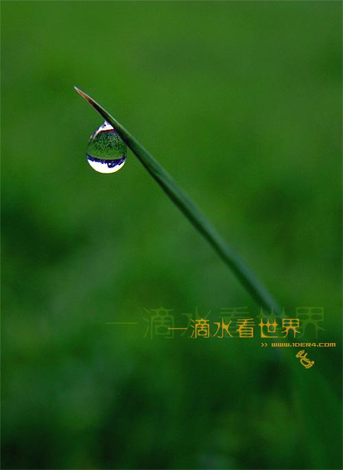 一滴水图片
