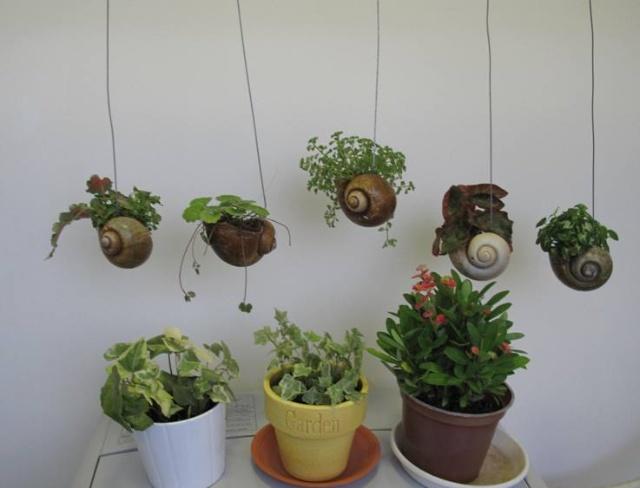 迷你植物挂在衣架上,三盆放在洗衣机上图片