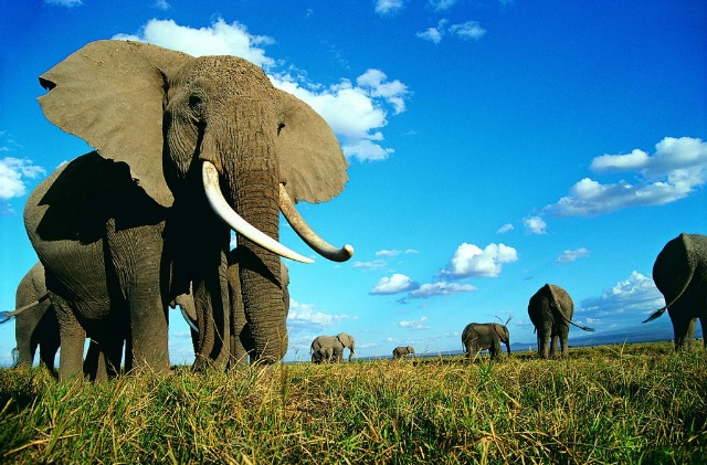 壁纸 大象 动物 640_421