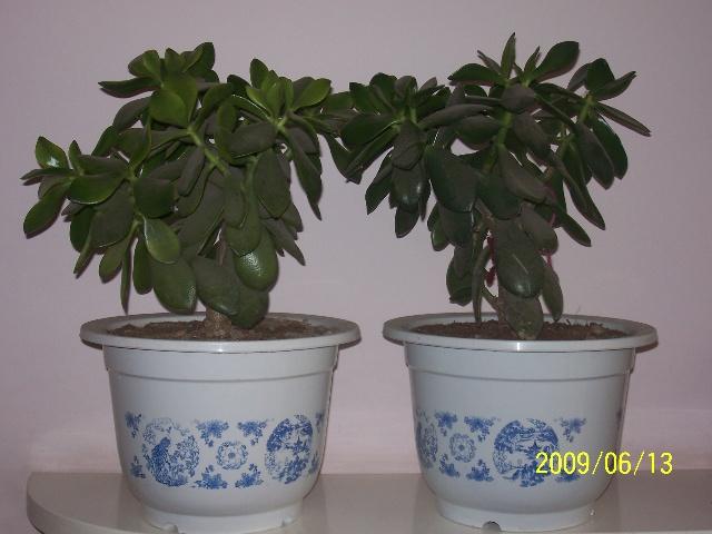 常见的家养花种类_家养花卉名称 图_家养花卉名称 图高清图片