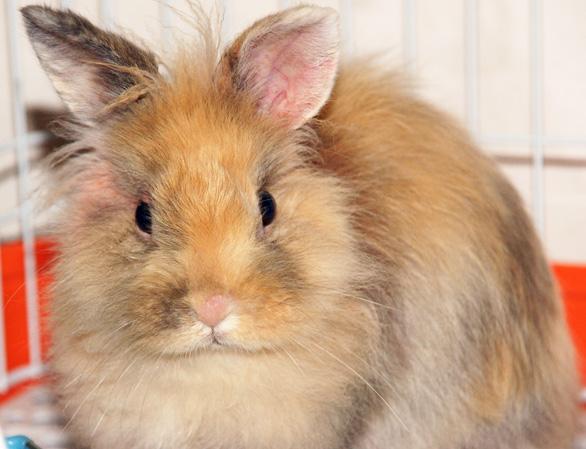 布织布手工制作兔子