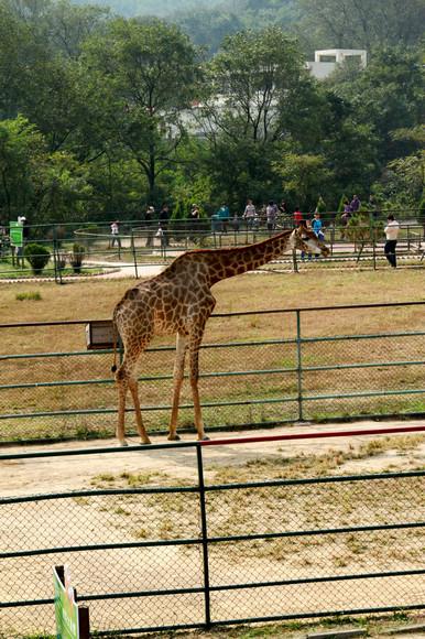十一假期——野生动物园