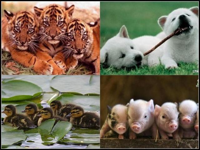 [转载]善良的动物,残酷的人