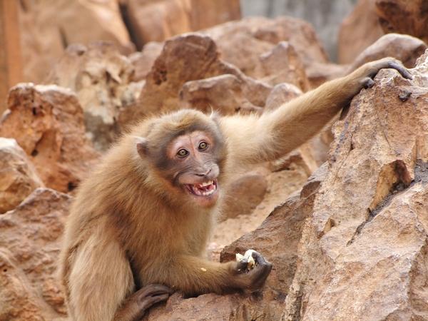 2月的昆明动物园,一只率真的猴子.