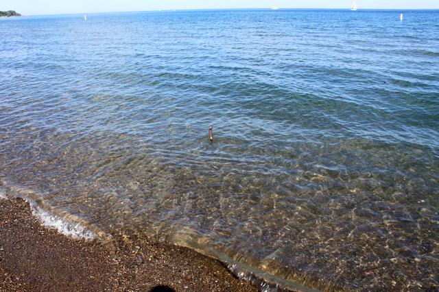 海边的小贝壳-Woodbine Park 露天音乐会 下 戏水和沙滩