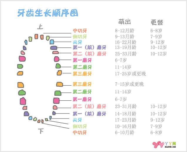 宝宝年龄 出牙顺序 5~10个月 上下各长两颗乳中切牙 6~14个月
