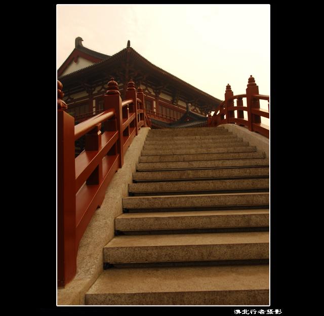 陕西靖边怪树林            2011年正月十五去榆林扫街