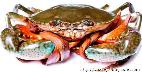 这种蟹只生活于从阿拉斯加的阿留申群岛到南加利福尼亚的太平洋东北部