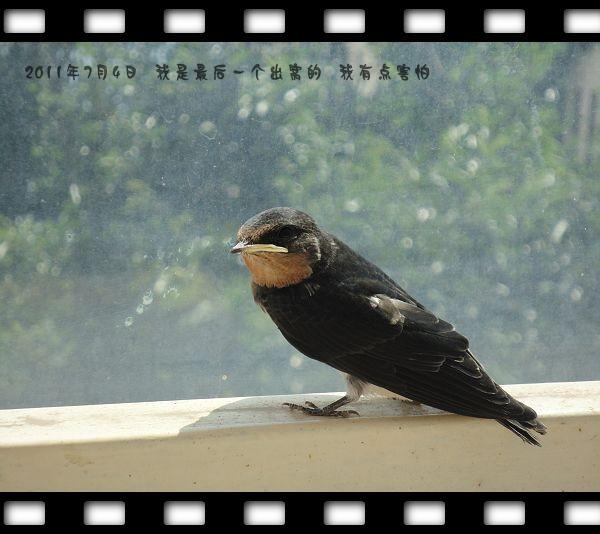 小燕子-病猫的领地-我的搜狐
